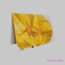 KIEZgrün, Eucalyptus