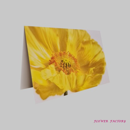 Grün im KIEZ, Eucalyptus