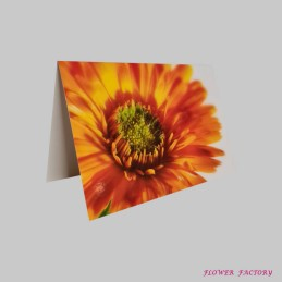 Orchideenblüte, pink
