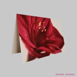 Orchideenblüte, weiß