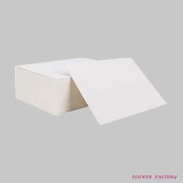 """""""Goeppertia makoyana"""" or peacock plant"""