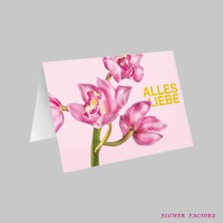 Philodendron Birkin (White measure) oder Baumfreund