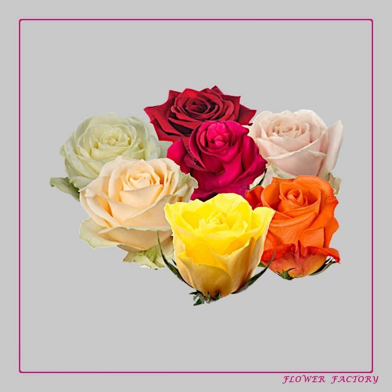 """Blumenerde """"Wachsen & Blühen"""""""